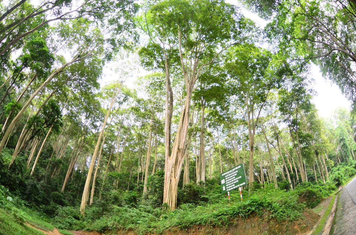 Natural forest in Tuong Duong district, Nghe An