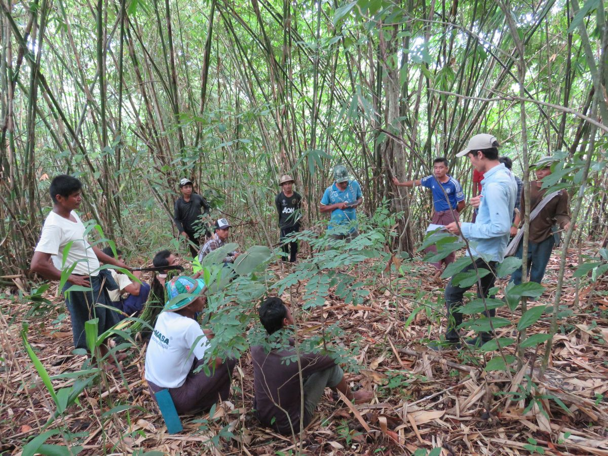 Community User Groups Watch their forests