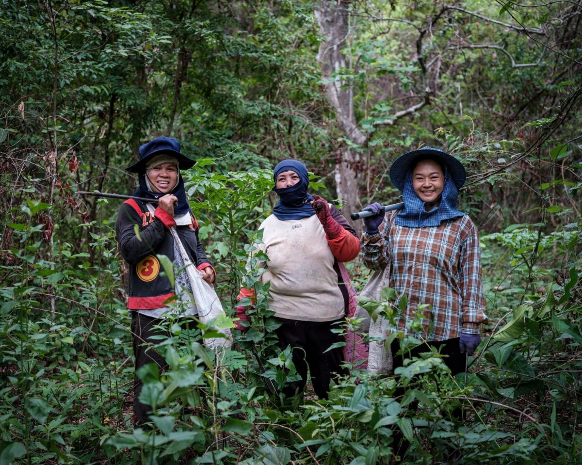 Impact of COVID-19 on forest communities in Thailand
