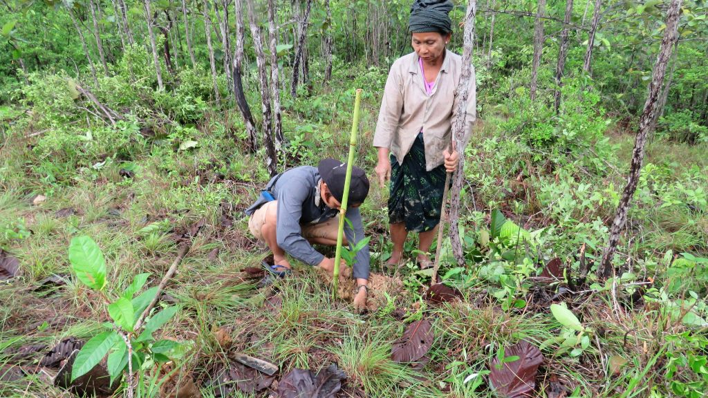 Enhancing human rights through responsible community forestry:  a case from Myanmar