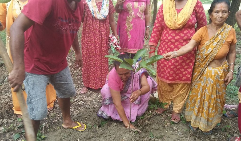 Butter Tree Plantation Initiative