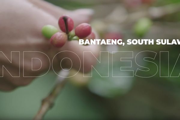 Brewing local entrepreneurship - Coffee farming in Bantaeng, Indonesia (teaser)