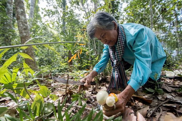 Community-led credit scheme in Cambodia opens space for women to participate in forest governance, protecting the forest and stopping illegal logging