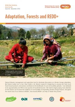 REDD-Net Asia-Pacific Bulletin #6: Adaptation, Forests and REDD+